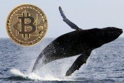 Balinalar 468 Milyon Dolarlık Bitcoin Transferi Yaptı!