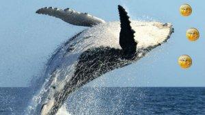 Bitcoin ve USDT Balinalarından Şüphe Çeken Hareketlilik!