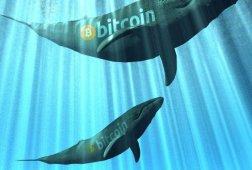 Bitcoin Balinalarından Heyecan Yaratan İşlem!