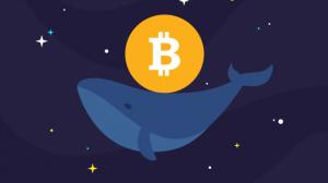 Schiff, Bireysel Yatırımcıların Balinalardan Sıkıldığını Düşünüyor