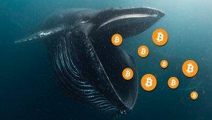 Bitcoin (BTC) Fiyatı Durgun Olsa da, Balinalar Alımı Sürdürüyor!