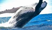 Balina Avcısı Açıkladı: Balinalar Bu 3 Altcoini Toplamaya Başladı!