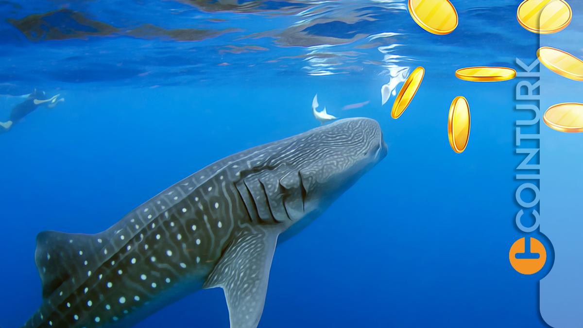 Balinalar Harekete Geçti: 705 Milyon Dolarlık Bitcoin ve Ethereum Taşındı