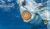 Harvard Profesöründen El Salvador ve Bitcoin (BTC) Değerlendirmesi!