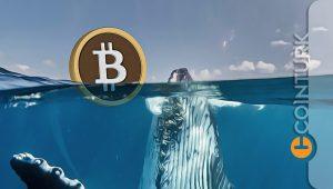 Balinalar Düşüşü Fırsat Bildi: Büyük Cüzdanlara Yüklü Bitcoin (BTC) Alımları Başladı