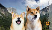 Shiba Inu (SHIB) Yorumları ve Dogecoin (DOGE) Fiyat Beklentileri