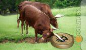 Son Dakika: SEC Sinyali Verdi! Bu Açıklama Ne Anlama Geliyor?