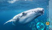 Bitcoin Balinalarının Sayısında Büyük Düşüş Yaşanıyor! 2012'deki Seviyelere Geriledi