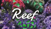 Reef Yatırımcılarını Heyecanlandıran Gelişme: Dev Borsa, REEF Listeleyeceğini Açıkladı!